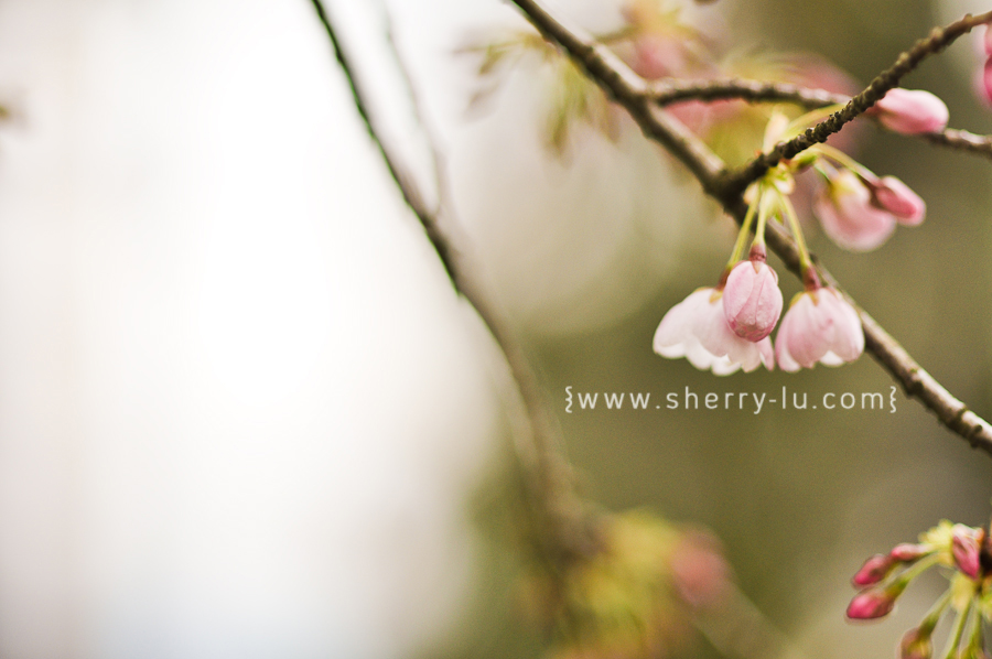 cherry blossoms in vancouver, vancouver portrait photographer
